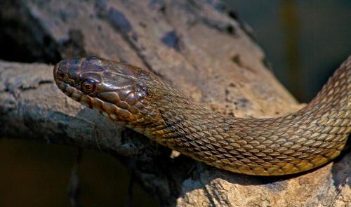 snake2_blog