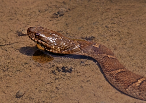 striped_snake_blog