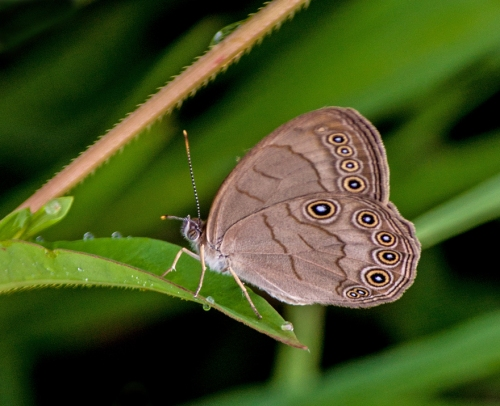 brown_butterfly2_blog