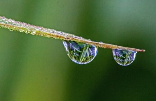 drops_blog