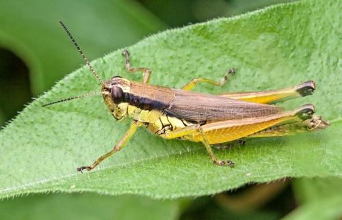 grasshopper_texture_blog