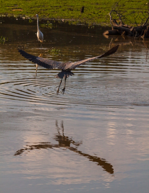 heron_silhouette3_blog