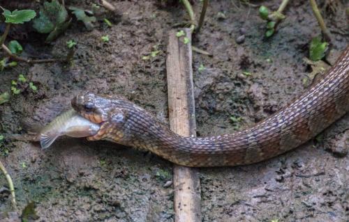 snake_fish2_blog
