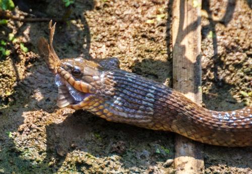 snake_fish4_blog