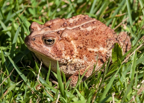 toad_blog