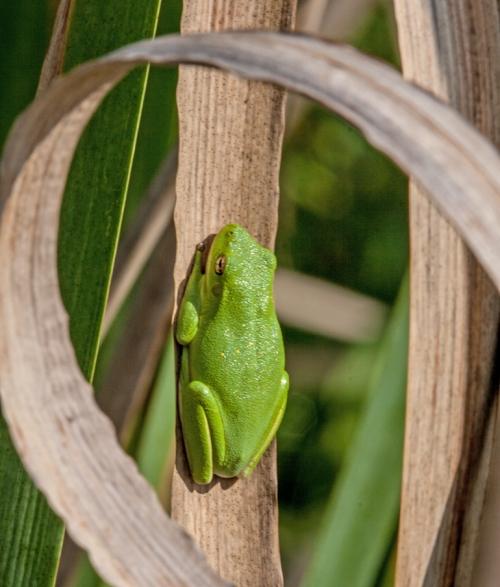 circle_frog_blog