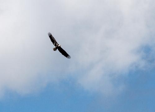 eagle1_blog