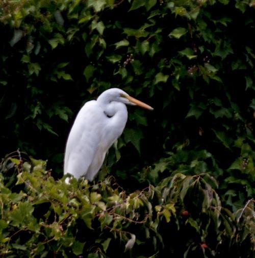 egret_tree_blog