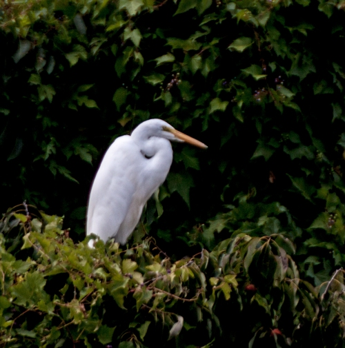 egret_tree_blog