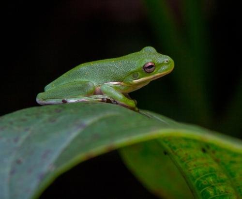 frog_leaf_blog