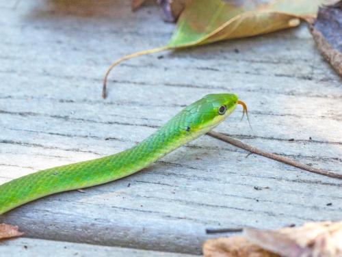 green_snake_blog
