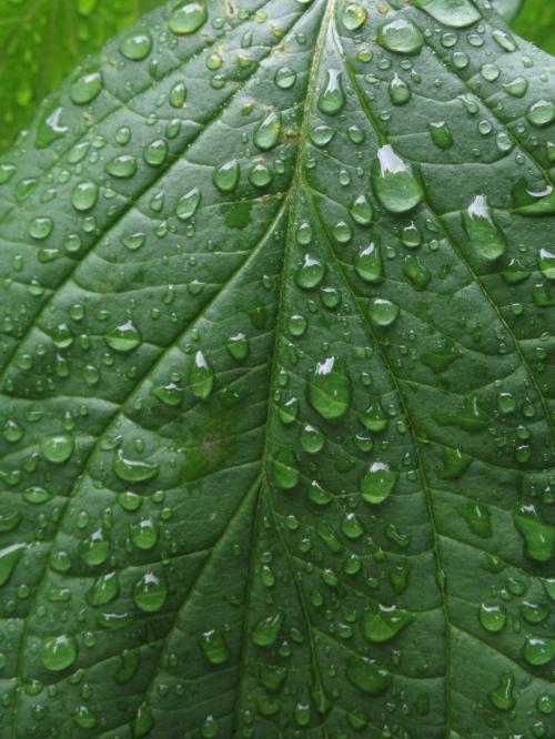 leaf_drops