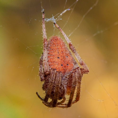 orange_spider1_blog