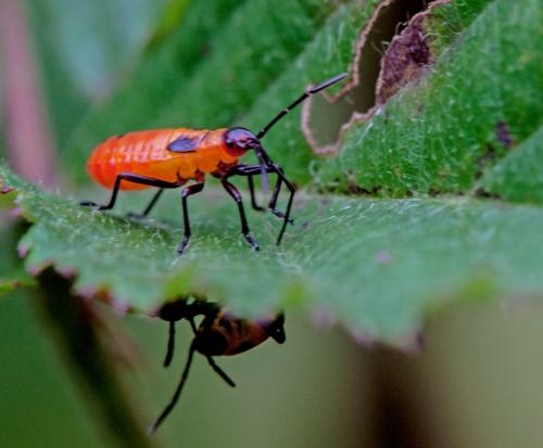 red_bug_blog