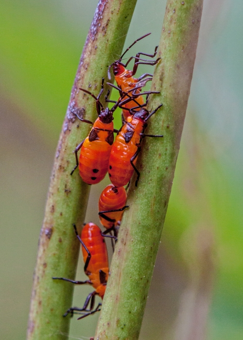 red_bugs_blog