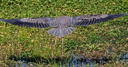 wingspan1_blog