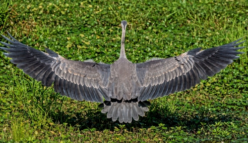 wingspan2_blog