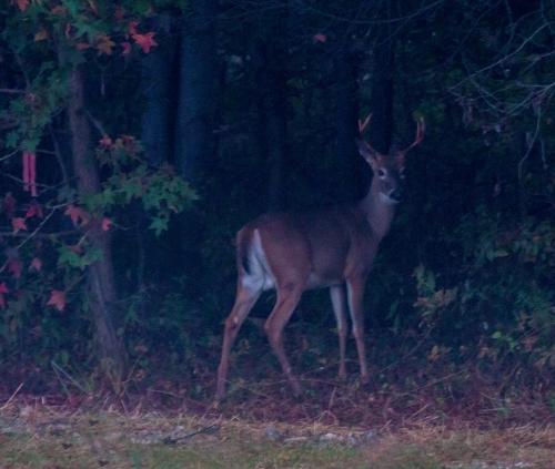 deer3_blog