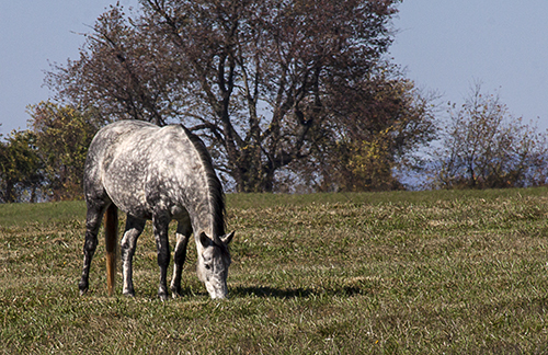 Five Legged Horse blog