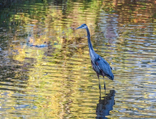heron_fall_light_blog