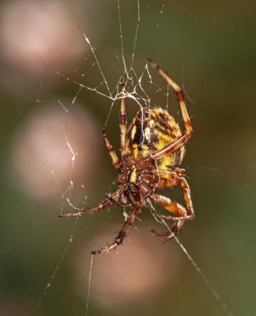orange_spider2_blog
