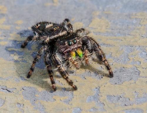 spider_jump1_blog