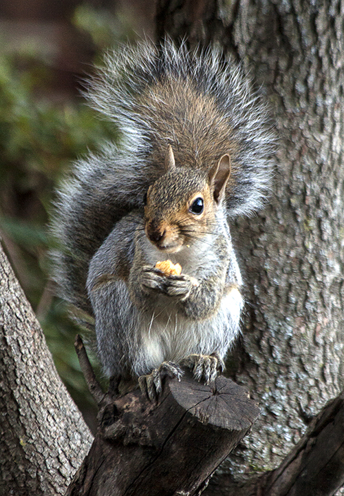 Squirrel Nut 2 blog