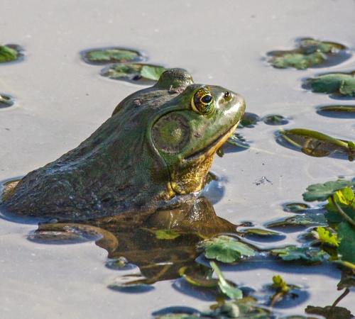 zen_frog_blog