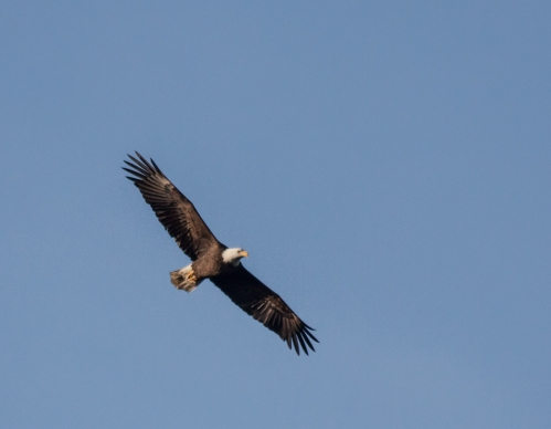 eagle2_11Nov_blog