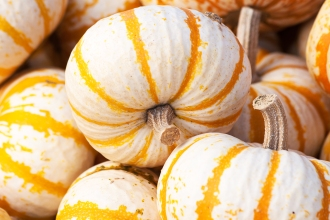 pumpkin_striped_blog