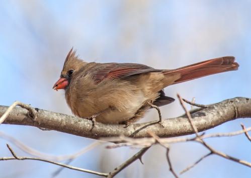 cardinal_looking_down_blog