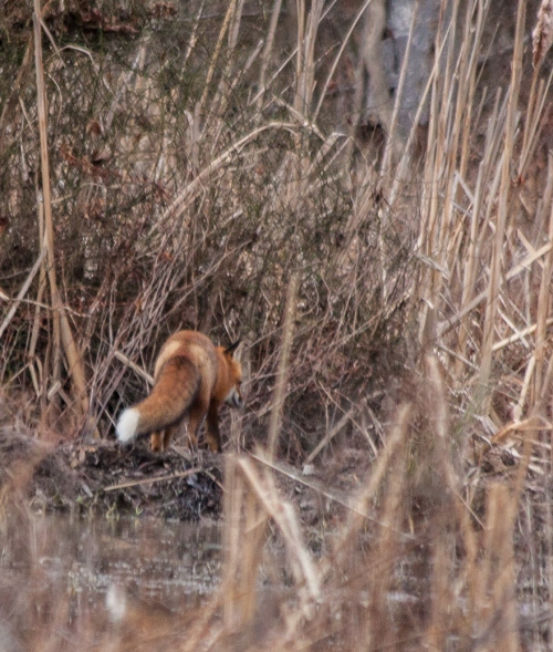 fox2_blog