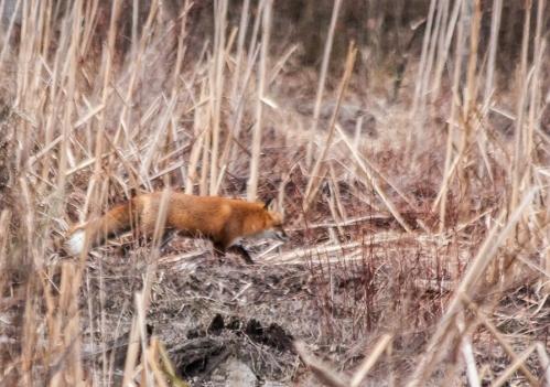 fox3_blog