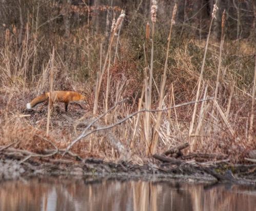 fox4_blog