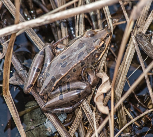 frog2_dec_blog