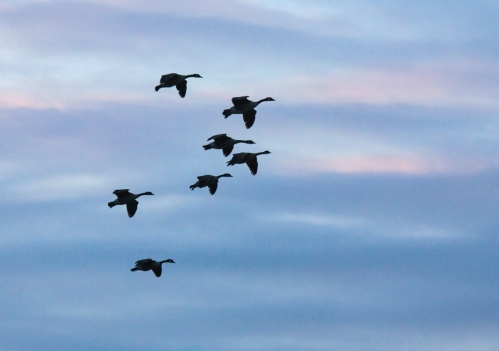 geese_at_sunset_blog