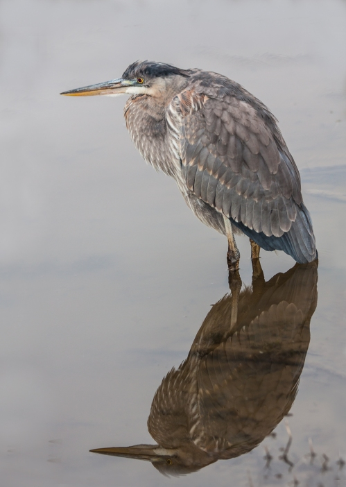 heron_morning2_blog