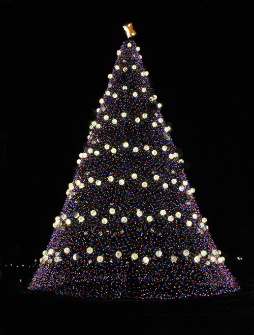 National_Christmas_Tree_blog