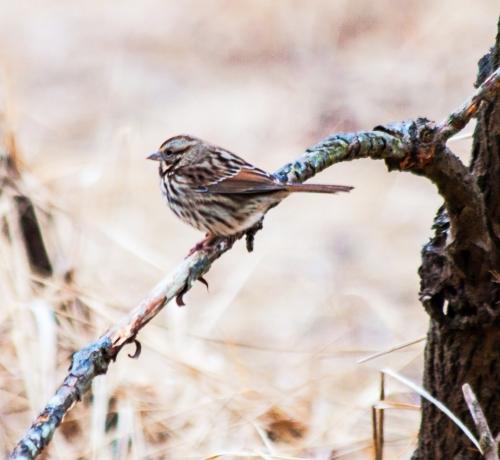 sparrow1_dec_blog