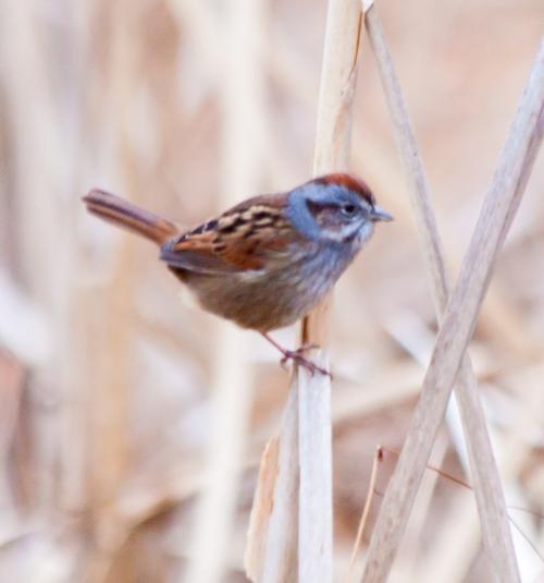 sparrow2_dec_blog