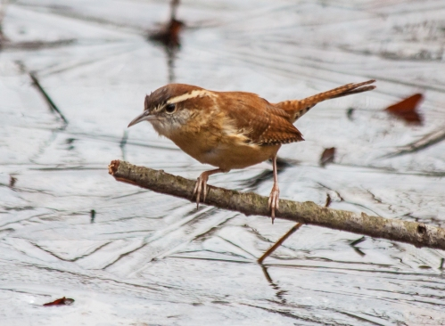 wren_dec_blog