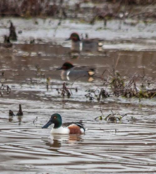 ducks_row_blog