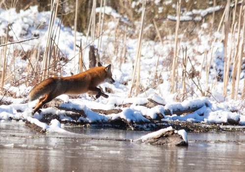 fox_trot1_blog