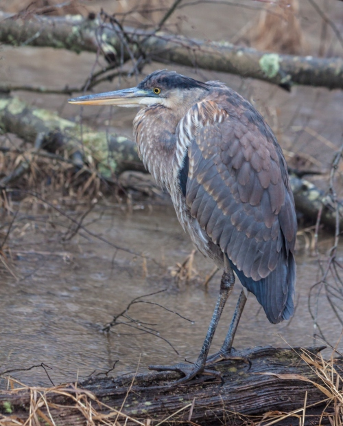 heron1_jan_blog