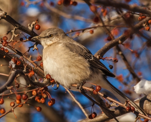 mockingbird_jan_blog