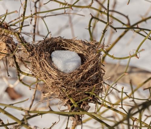 nest_blog
