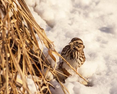 sparrow_snow_blog