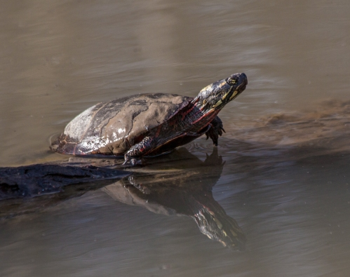 turtle_jan_blog
