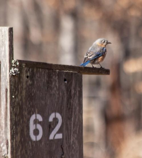 bluebird_feb_blog