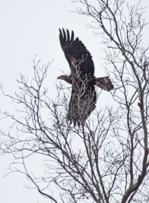 eagle_early_blog